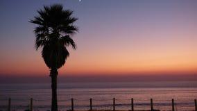 Palm Tree Silhouette Sunset Beach Ocean Landscape Purple Orange royalty free stock images