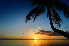 Palm tree silhouette on sunset beach Royalty Free Stock Photos