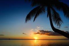 Palm tree silhouette on sunset beach Royalty Free Stock Photos