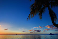 Palm tree silhouette on sunset beach Royalty Free Stock Images