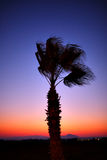 Palm tree silhouette in sunset. Beautiful sky and a mountain stock photos