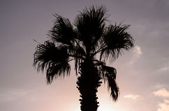 Palm Tree Silhouette Stock Photography