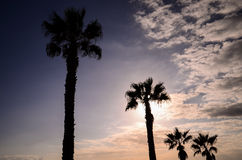 Palm Tree Silhouette Stock Images
