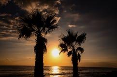 Palm Tree Silhouette Royalty Free Stock Photo