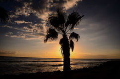Palm Tree Silhouette Royalty Free Stock Image