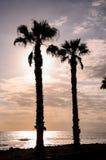 Palm Tree Silhouette Stock Image