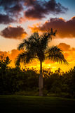 Palm tree silhouette on sunset Royalty Free Stock Image