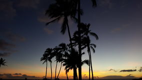 Palm tree silhouette at sunset. Sunset on maui with palm trees swaying in the wind Royalty Free Stock Photos