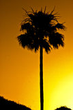 Palm Tree silhouette at sunset Stock Photography
