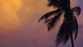 Palm Tree Silhouette at Sunset Pink and Purple Sky Background with Flashlights. Empty Copy Space for Text