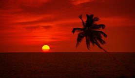 Palm tree silhouette on sunset sky background Stock Image