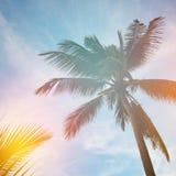 Palm tree silhouette in sunset sky Stock Photos