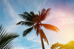 Palm tree silhouette in sunset sky Royalty Free Stock Images