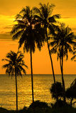 Palm tree silhouette at sunset, Thailand Royalty Free Stock Photo