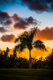 Palm tree silhouette on sunset Stock Image