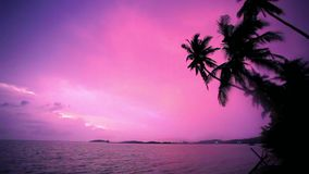 Palm tree silhouette at sunset on tropical beach. Koh Samui. Thailand stock footage