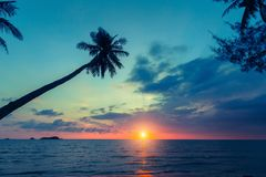 Palm tree silhouette on a tropical sea beach. Palm tree silhouette on a tropical sea beach during sunset Stock Images