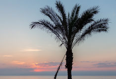 Palm tree silhouetted against sky. And sea at sunrise Stock Photography