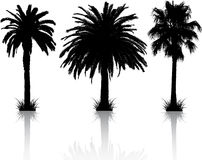Palm tree silhouettes Royalty Free Stock Image
