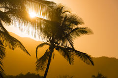 Palm Tree Silhouettes Stock Photo