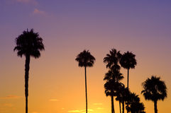 Palm Tree Silhouettes. Against a tropical sunset Stock Photos