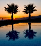 Palm Tree Silhouettes in an Aegean sunrise Royalty Free Stock Photography