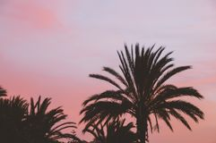 Palm tree silhouettes against colorful sunset sky Stock Images