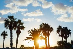 Palm tree silhouettes against sunset background. Palm tree silhouettes against blue sky and sunset background Stock Photos