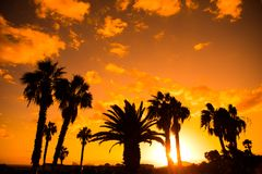 Palm tree silhouettes against sunset background. Palm tree silhouettes against orange sunset background Royalty Free Stock Image