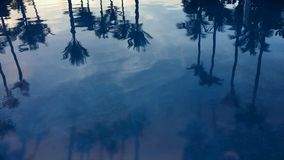 Palm Tree Silhouettes Blue Swimming Pool. Tropical silhouettes of palm trees reflecting on the surface of a swimming pool stock video