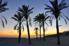 Palm tree silhouettes - Costa del Sol. Palm tree silhouettes on Cabopino beach-Costa del Sol, at sunset royalty free stock image