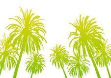 Palm tree silhouettes isolated Stock Image