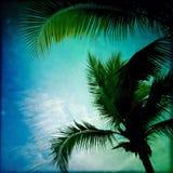 Palm tree silhouettes Royalty Free Stock Photo