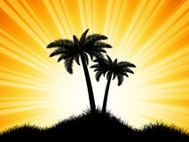 Palm tree silhouettes on sunny background Royalty Free Stock Image