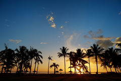 Palm tree silhouettes on sunset beach Royalty Free Stock Images
