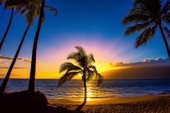 Palm Tree Silhoutte in the Sunset Maui stock photo