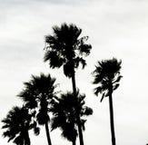 Palm Tree siloette in California Royalty Free Stock Photos