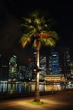 Palm tree in the singapore city Stock Photos