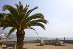 Palm tree in Sitges Royalty Free Stock Photos