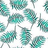 Palm Tree Sketch A Stock Photos
