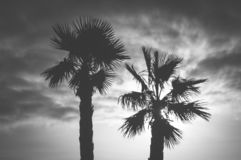 Palm tree and sky stock photo