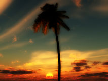 Palm Tree Sky 2. An image of a palm tree against a tropical cloudy sunset or sunrise, it would be a good conceptual image representing holidays Stock Images