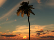 Palm Tree Sky 4. An image of a palm tree against a tropical cloudy sunset or sunrise, it would be a good conceptual image representing holidays Stock Image