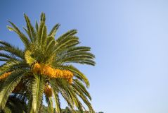 Palm Tree and Sky Stock Image
