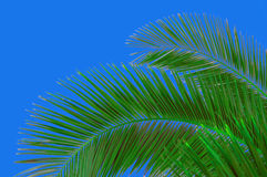 Palm-tree and sky Royalty Free Stock Photos