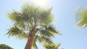 Palm tree on sky backdrop. Green plant and sunlight. Spend vacation in tropics stock video footage