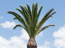 Palm tree on sky background. Stock Photography