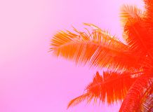 Palm tree on sky background. Palm leaf ornament. Pink and orange toned photo. Stock Image