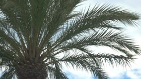 Palm tree on sky background. stock video footage