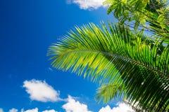 Palm tree on sky background Stock Photography